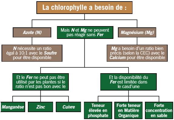 Knife chlorophylle