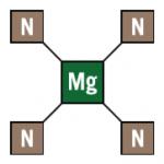 Per-4 Max chlorophylle
