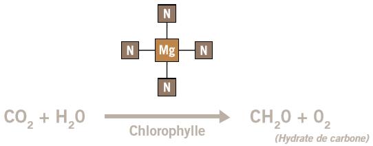phlex_mag_hydrate_carbone